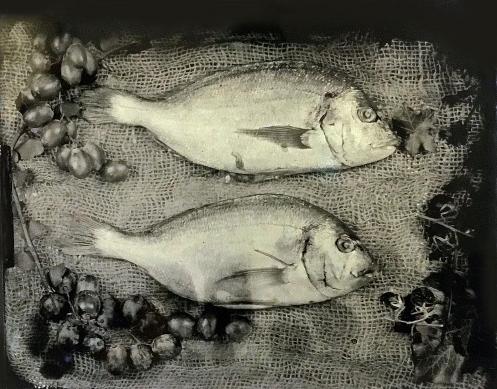 Sea Bream Tintype